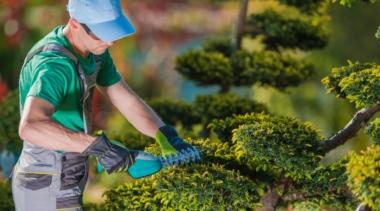 Photo of landscape gardener trimming a bush