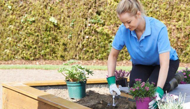 Photo of landscape gardener tending to flower beds